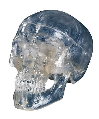 Transparent skull