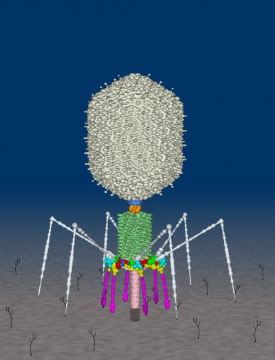 T4 Phage